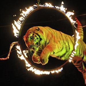 Цирки Аргаяша